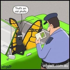 Butterfly.cop